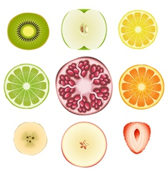 Fruit Slice Set vector image vector image
