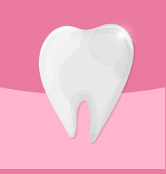 Healthy shiny tooth on pink background vector