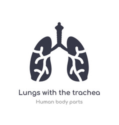 Lungs with trachea outline icon isolated line vector