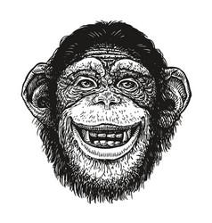 hand drawn portrait of chimpanzee funny monkey vector image vector image
