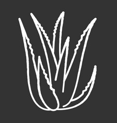 Aloe vera chalk white icon on black background vector