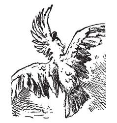 Cockatoo vintage vector