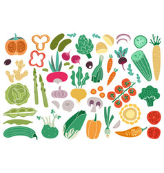 Color vegetables tomato zucchini potatoes vector
