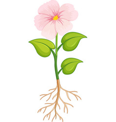 Pink flower with green leaves and roots on white vector