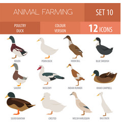 Poultry farming duck breeds icon set flat design vector