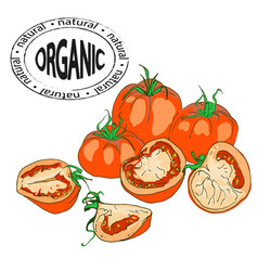 composition of whole and pieces of tomato vector image vector image