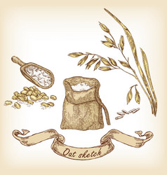 Bakery sketch hand drawn of oats and grain vector
