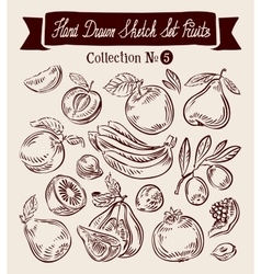 Hand drawn sketch collection fruit vector