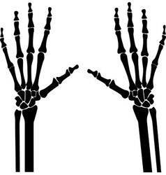 xray hands vector image