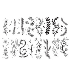 hand drawn decorative branches with leaves and vector image