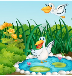 A pond with ducks vector