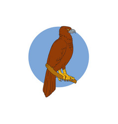 australian wedge-tailed eagle perch drawing vector image