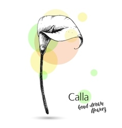 Calla flower for wedding or birthday card vector