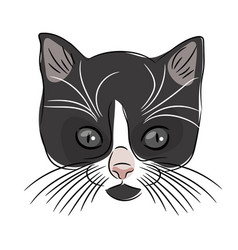 face of a cute kitten hand-drawn cat on a white vector image