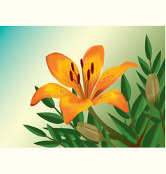 Orange lily realistic flower vector