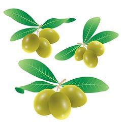 Set of olives vector