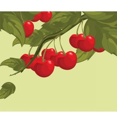 Delicious cherry on a branch vector image