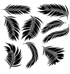 Palm Leaves Silhouette vector image