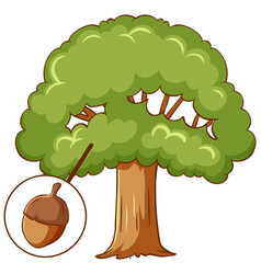 Acorn tree isolated on white background vector