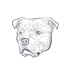 Amstaff dog head hand drawn sketch vector