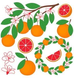 Grapefruit Set vector image