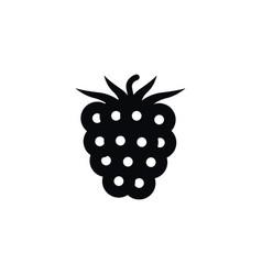 Isolated blackberry icon freshness element vector