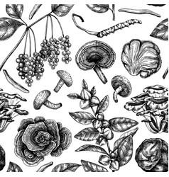 Medicinal plans and mushroom background vector