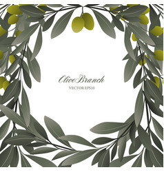 olive branches and green olives frame on white vector image