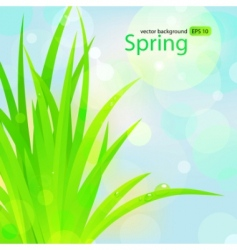 spring grass with water drops vector image vector image
