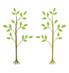 two young trees vector image