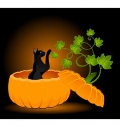 cat in pumpkin vector image vector image