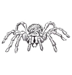 Black spider animal vector image