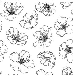 cherry sakura blossom floral seamless pattern vector image