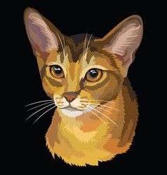 Colored abyssinian cat vector