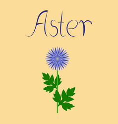 Flat on background flower aster vector