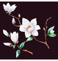 watercolor magnolia flowers vector image