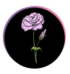 Beautiful eustoma flower in a black circle floral vector