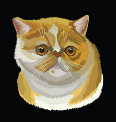 colored exotic shorthair cat vector image