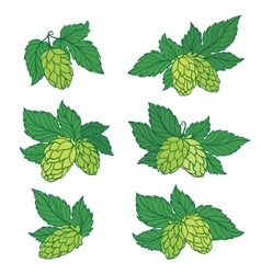 Hops Icons vector image