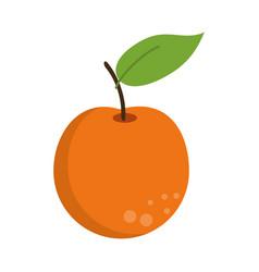Orange citrus fruit icon vector