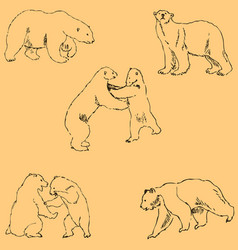 The bears sketch by hand pencil drawing by hand vector