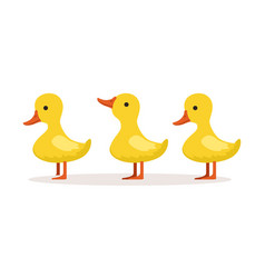 Three cute cartoon ducklings characters standing vector