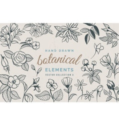 Hand Drawn Botanical Elements vector image vector image