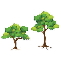 Collection trees on white background cartoon vector