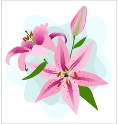 Pink Lilies on a Blue Background vector image vector image