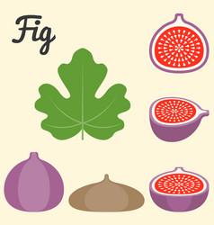 fig icon vector image vector image