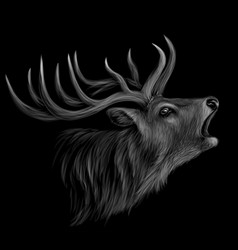 deer realistic artistic black-and-white portrai vector image