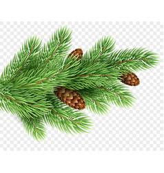 fir tree branch realistic christmas vector image