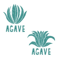 Hand drawn template of agave vector