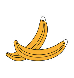 Sketch color silhouette set bananas fruit vector